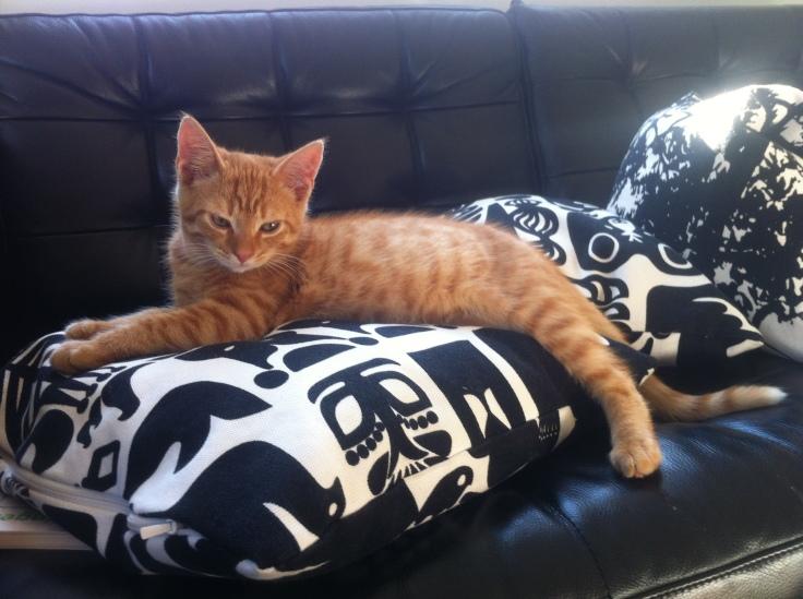 Meet Taiga our cat born 12.5.2012