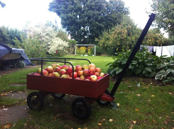 apple vogn