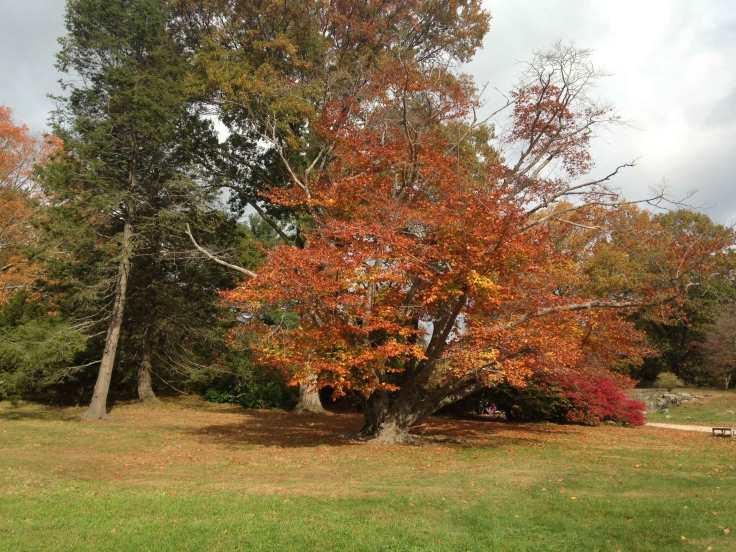 Concord-foliage